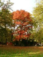 a red tree by conceptions
