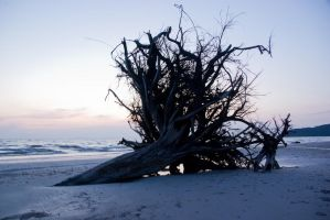 the buried tree by T-bau