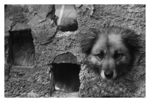 Dog through the looking wall by Tweet-dnb