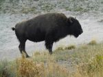 Yellowstone stock -4 by Carol-Moore