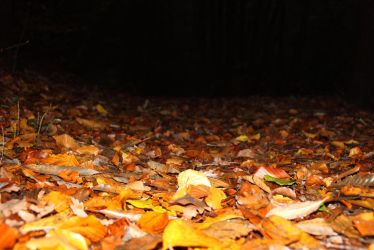 Automne by mamork