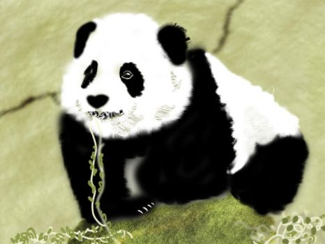 digital painting of panda by avinsh12589