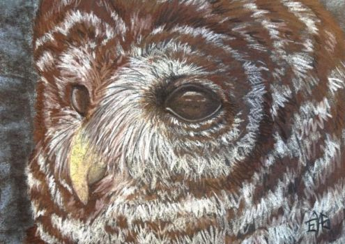 WaHooHoo the Barred Owl by WolfsEclipse