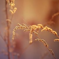 Golden Hour by Snowflake20