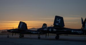 Tigercats in the Morning by IntermissionNexus