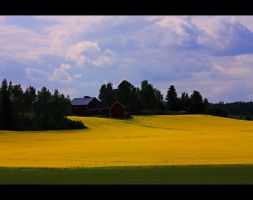 Yellow Field by ximocampo