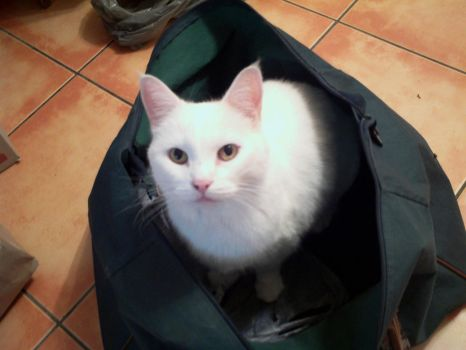 Kitty in a Bag by F4fullpower