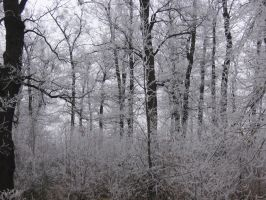 UNRESTRICTED - White Forest by frozenstocks