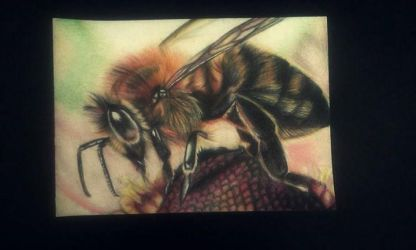 bee by Klaudia070