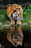 Mirroring2 by brijome