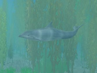 ZT2 Showcase - Common Bottlenose Dolphin by ProfDanB
