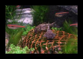 Fish In The Tank 03 by Hector42