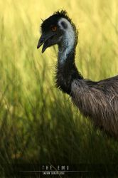 The Emu by Saurav