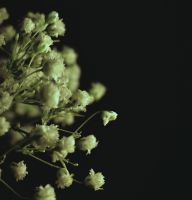 baby's breath moonlight by Undrtheskysoblue