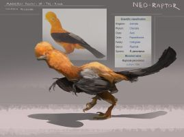 Raptor-ized bird: andean cock of the rock by Kiabugboy