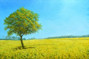 Raps Field In Midday by CalciteMink1610