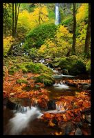 Memories of Fall by hikester