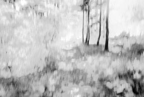 in pathless wood by partiallyHere