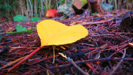 Yellow Leaf (HD Wallpaper) by Pimpernel
