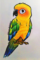 Sun Conure by Calicco