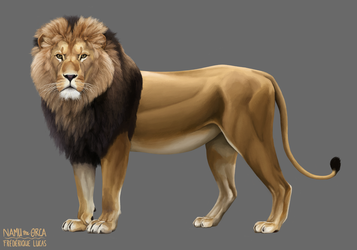 African lion by namu-the-orca