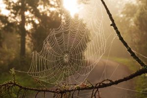 Spiderweb by Antz0