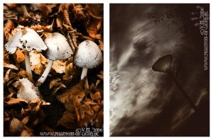 ::mushroom.and.dark.sky:: by Phantom-of-light