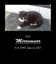 Dedicated to the memory of my cat Mirremurr by JoeltheSwedishDragon