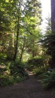 HoH River Trail by Speck2