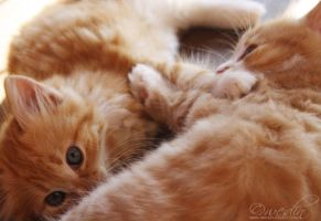 Kittens by checkmycollar