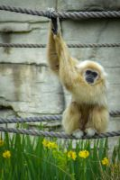 Monkey Thing 1 by WendiJo129
