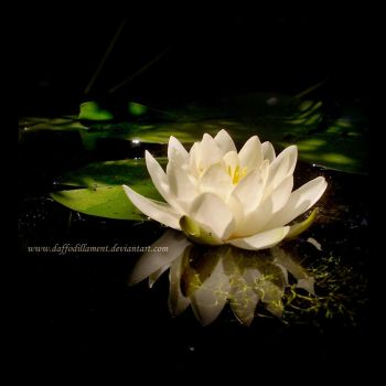 The Water Lily II by DaffodilLament