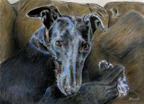 Greyhound by SRussellart