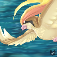 Pokemon: Pidgeot by Takarti