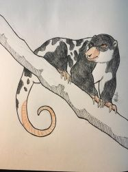 Inktober day 9 - black spotted cuscus by DRGNFL