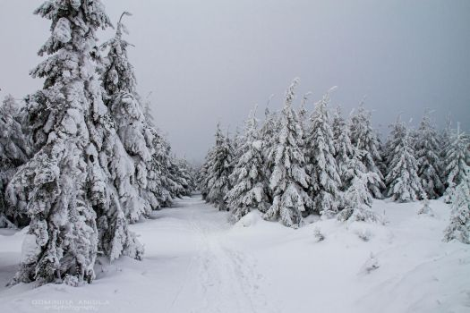 Winter In Owl Mountains by DominikaAniola