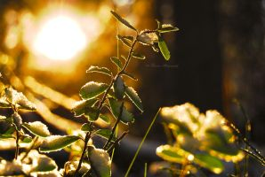 Under the winter sun by Floreina-Photography