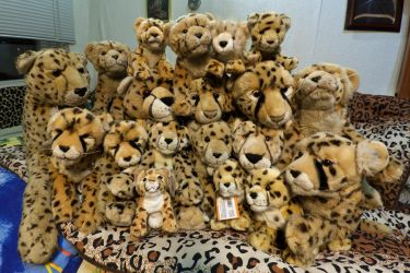 All my cheetahs 2011 by fpanther