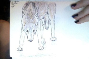 Alert Mexican Wolf Sketch 2 jan 8,2o14 by sombra-khenney