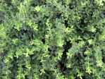 BASIC TERMS, Green Bush 1 by mmp-stock