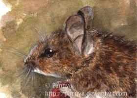 Wood Mouse ACEO by Pannya
