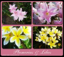 Plumerias and Lilies by blushing