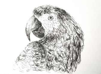 Inktober 2018 Day 13 - Parrot by Lauralina