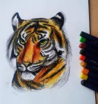 Tiger with Oil Pastels
