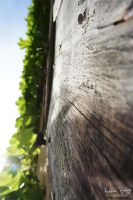 The wooden path to the beautiful light by uniQsDesigns