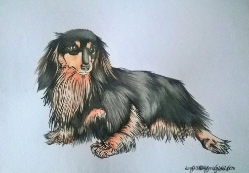 Miniature Longhaired Dachshund by kael1030