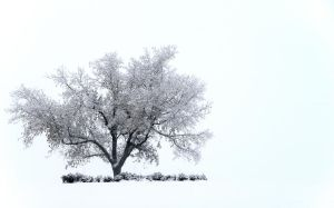 The White Out by Handie