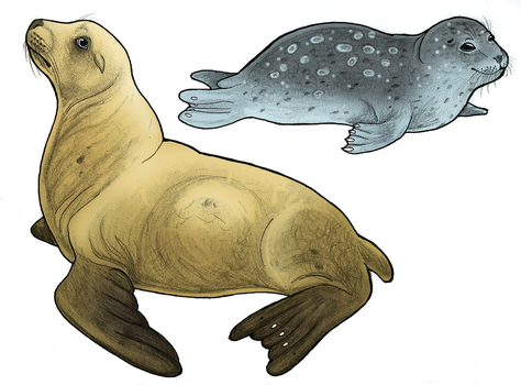Seal or Sea Lion? by WhaleWolf