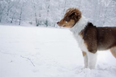 Dog in the snow by Mineoremedia