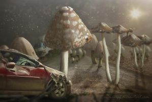 Mushrooms by annewipf